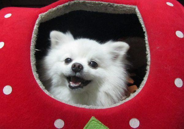 לטייל בסטייל: אקססוריז ממותגים לכלבים אופנתיים